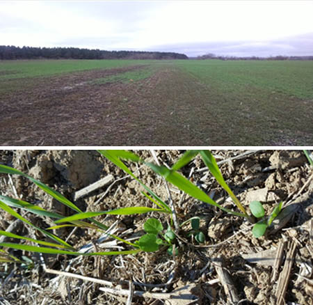 USDA-NRCS 201-202: Monitoring the effects of cover crops on water quality